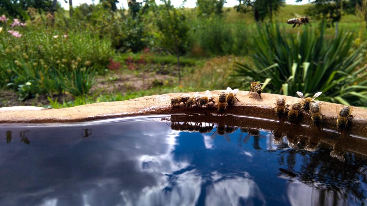 Fotos gratis piedras abejas c sped flor reflexi n for Estanque reflectante