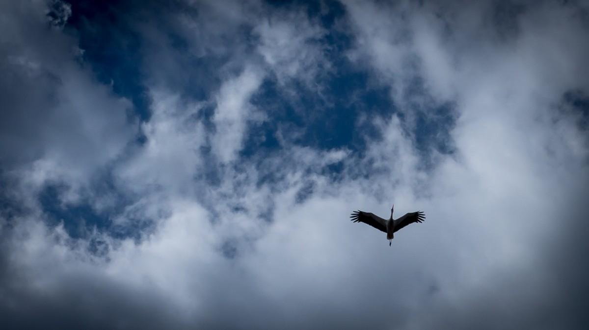 Vögel Himmel