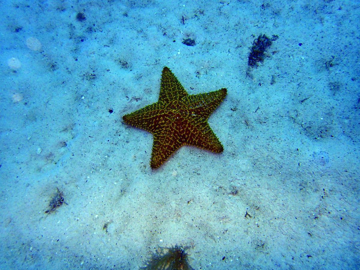 сказать картинки морские звезды дельфины оптические охотничьи для