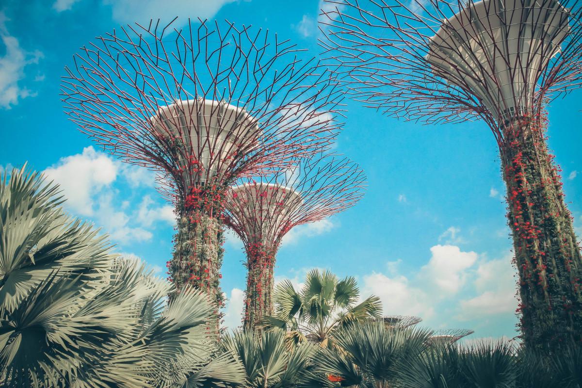 Singapour, arbre, végétation, la nature, ciel, bleu, plante, palmier, Plante ligneuse, Sont des échelles, botanique, feuille, paysage, Desert Palm, branche, nuage, palmier dattier, vacances, Images Gratuites In PxHere