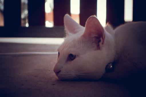 niedlich,Katze,Haut,Felidae,Fleischfresser,Whiskers