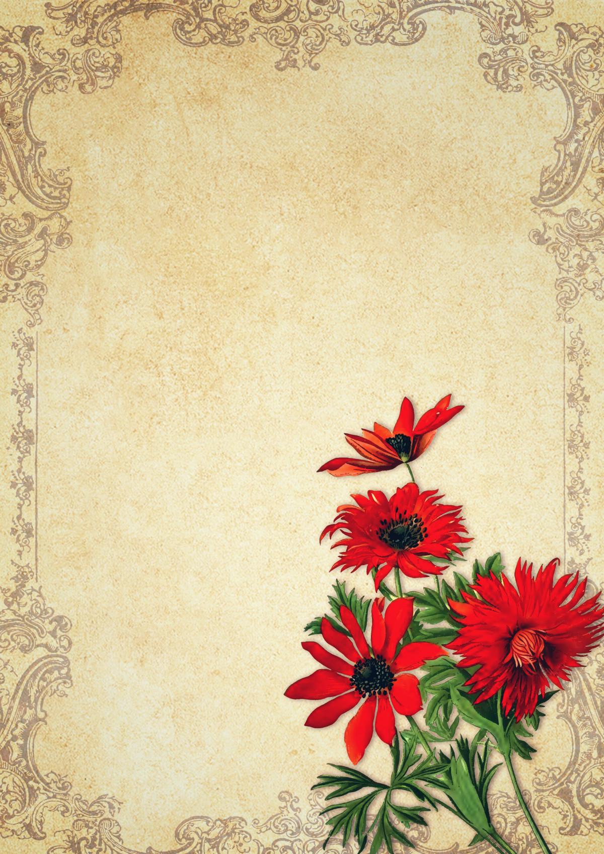 Gambar Vintage Bunga Anemon Hortensis Ornamen Bingkai