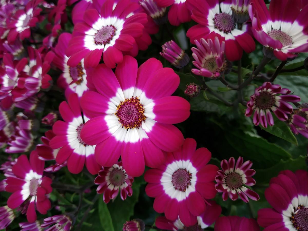 цветы однолетники цветущие все лето картинки пасху
