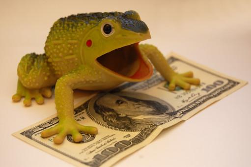 カエル,財政,富,資本,コイン,紙幣