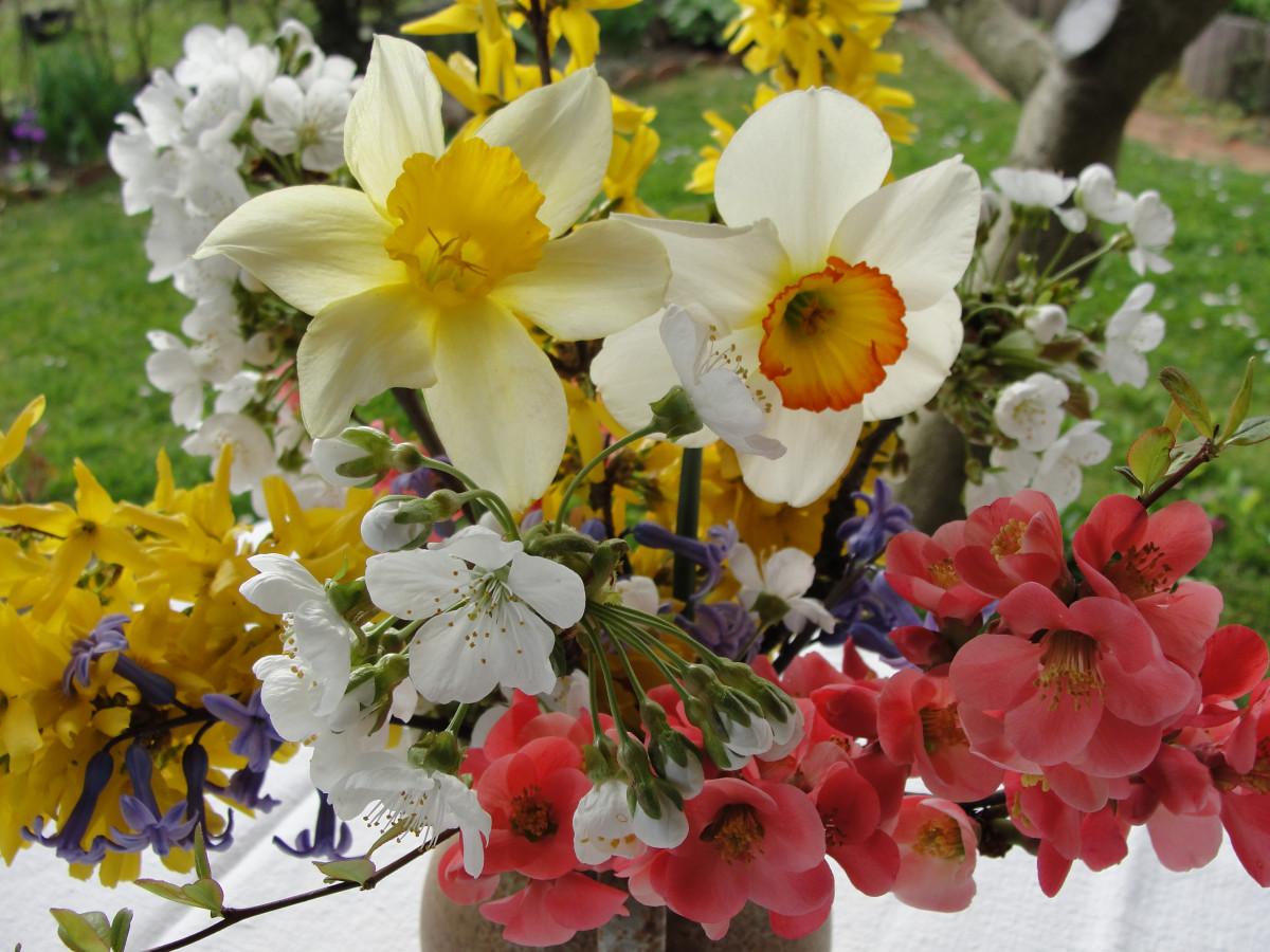 Красивые весенние картинки с цветами