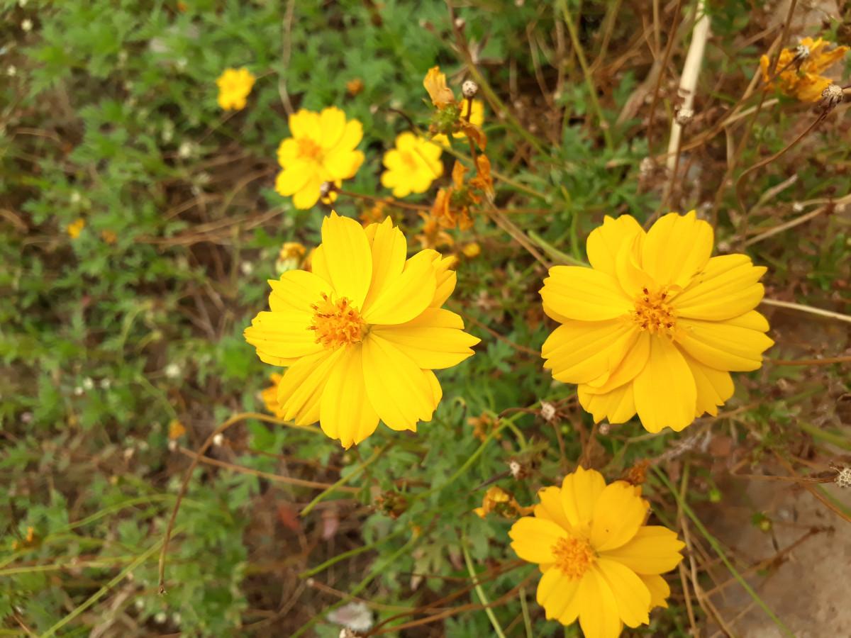 Fiori Gialli In Primavera.Immagini Belle Fiori Gialli Natura Fiore Giallo Pianta