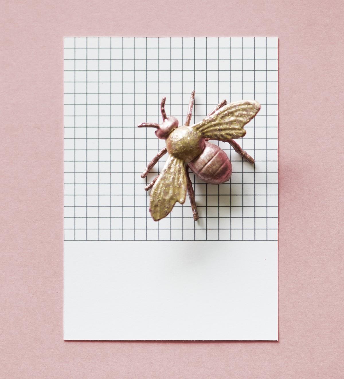 Moths Eating Dog Food