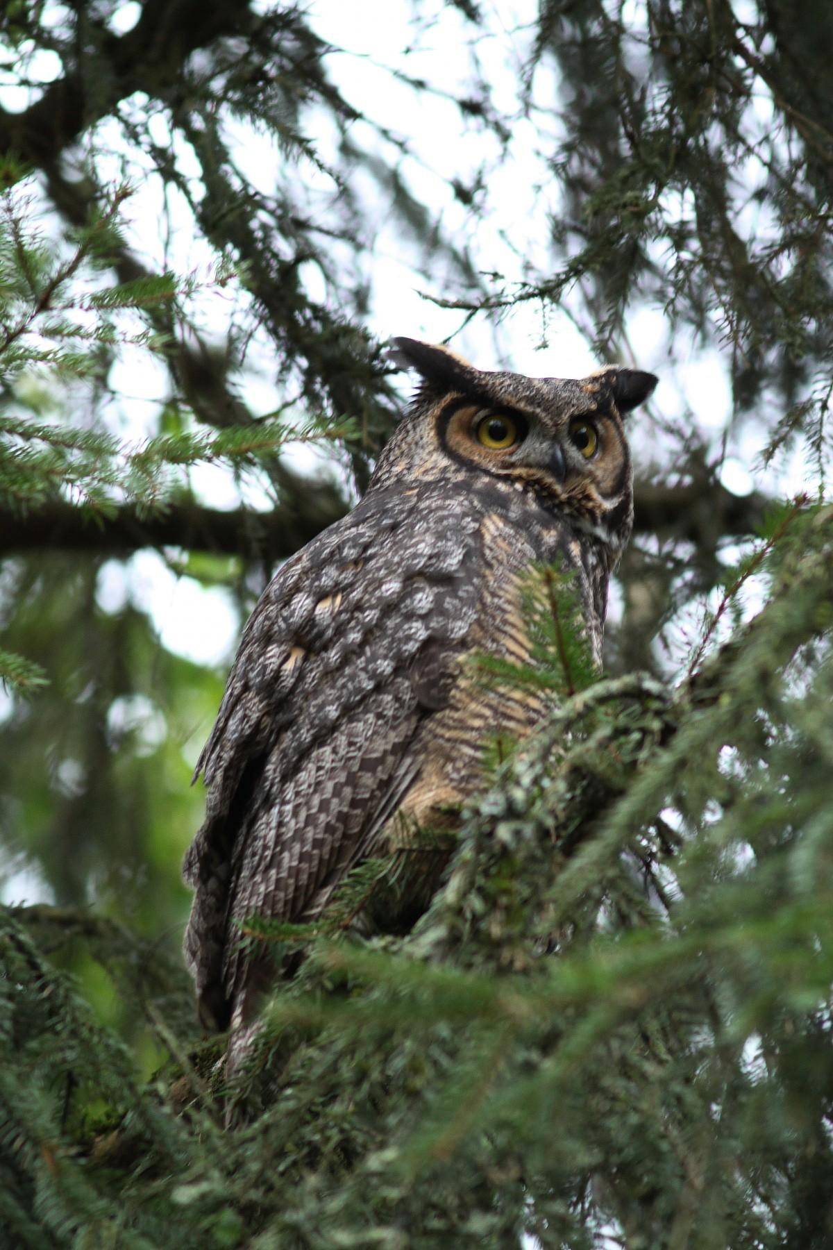 Fotos gratis : árbol, rama, pájaro, fauna silvestre, pico, ave de ...