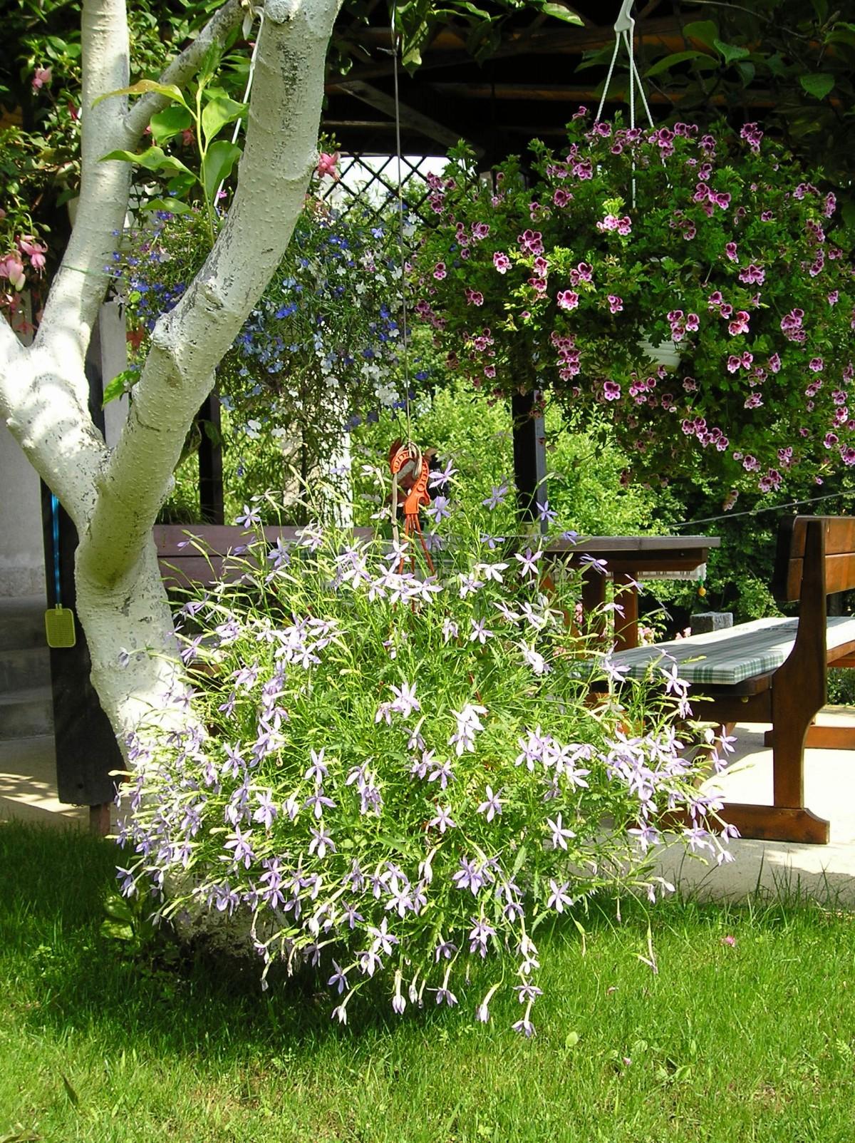 Afbeeldingen Bloemen In Pot