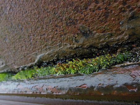 雑草,鋼,さびた,成長する,壁,岩