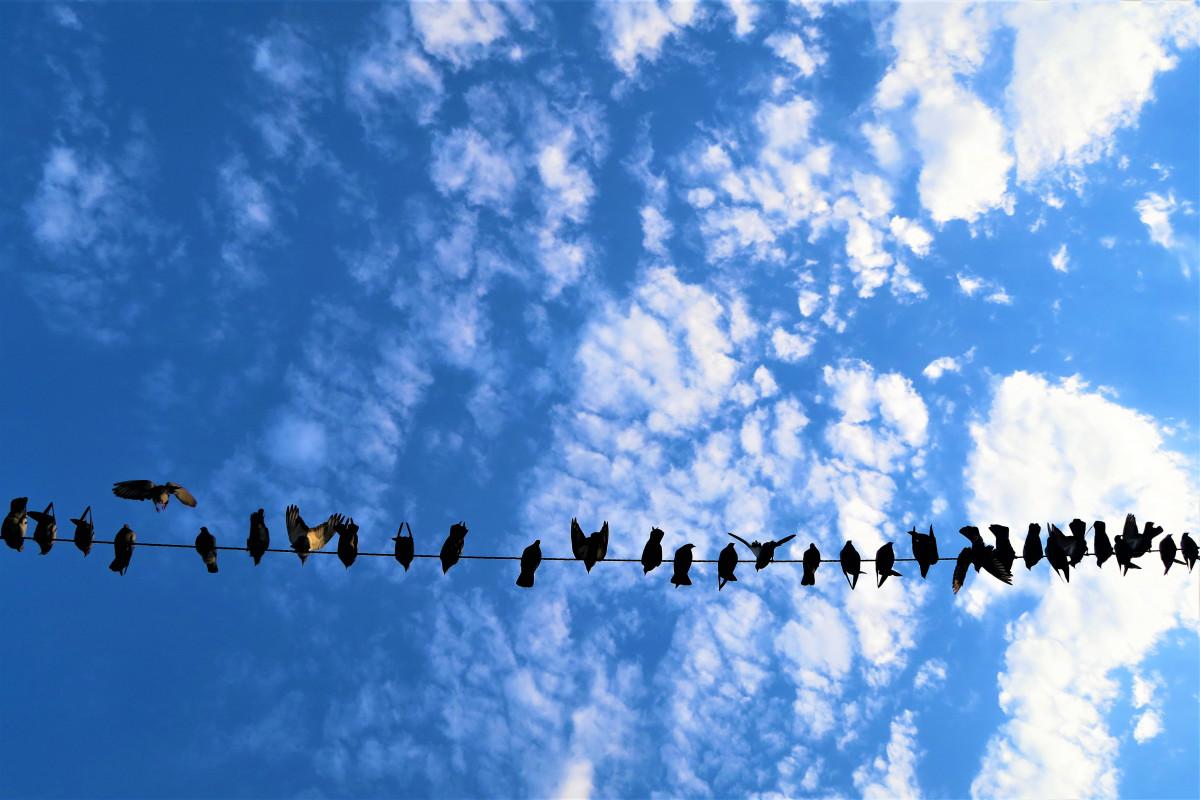 Kuşlar gökyüzü Bulutlar doğa Özgürlük hayvan uçan mavi gündüz Metin bulut atmosfer yazı tipi Göç Kuş göçü sakin kuş sürü Meteorolojik olgu Dünya