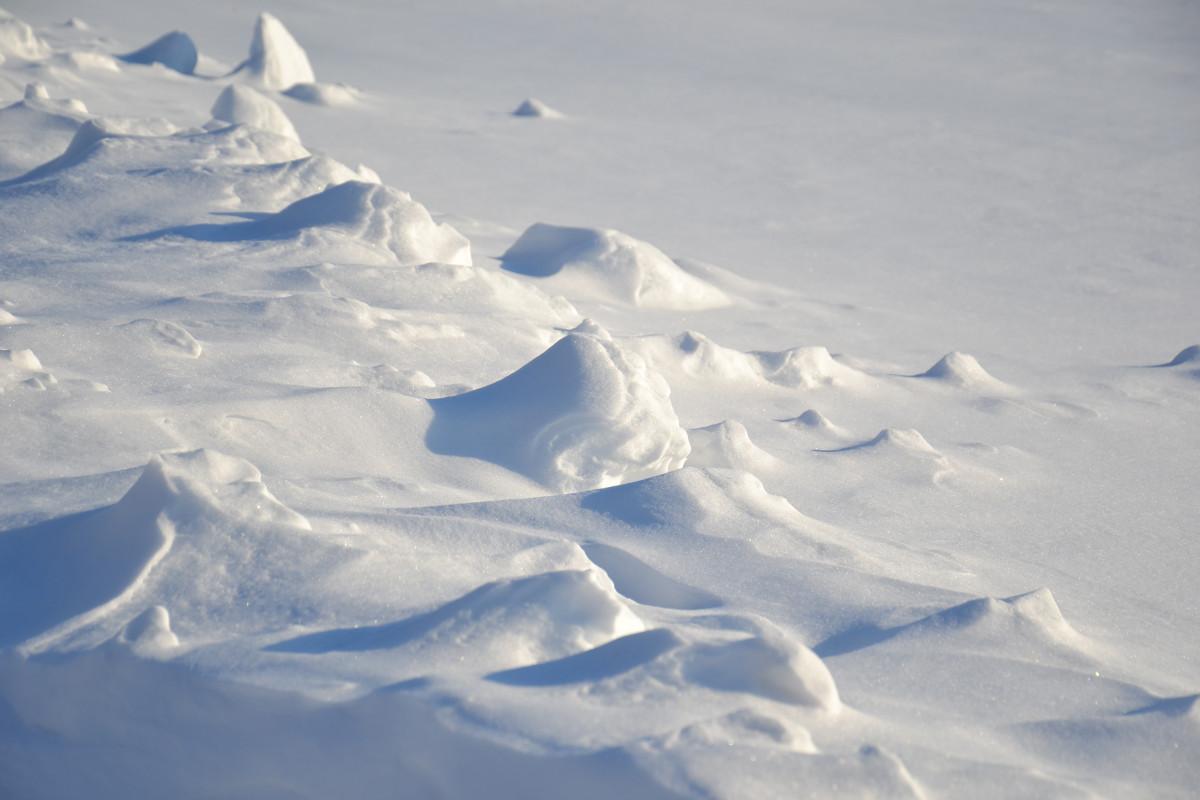 Free images winter field snowfield snowdrifts - Ren des neige ...
