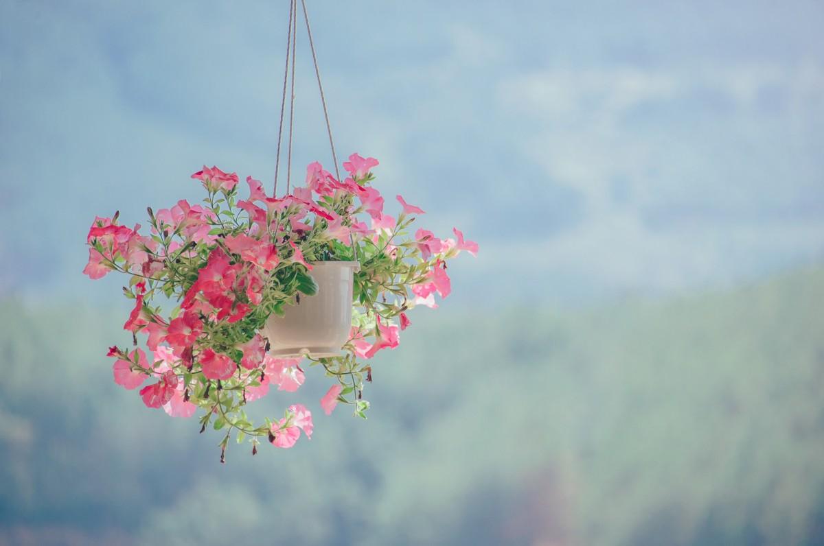 kostenlose foto blumen sch n landschaft pastell frisch nat rlich rosa himmel natur. Black Bedroom Furniture Sets. Home Design Ideas
