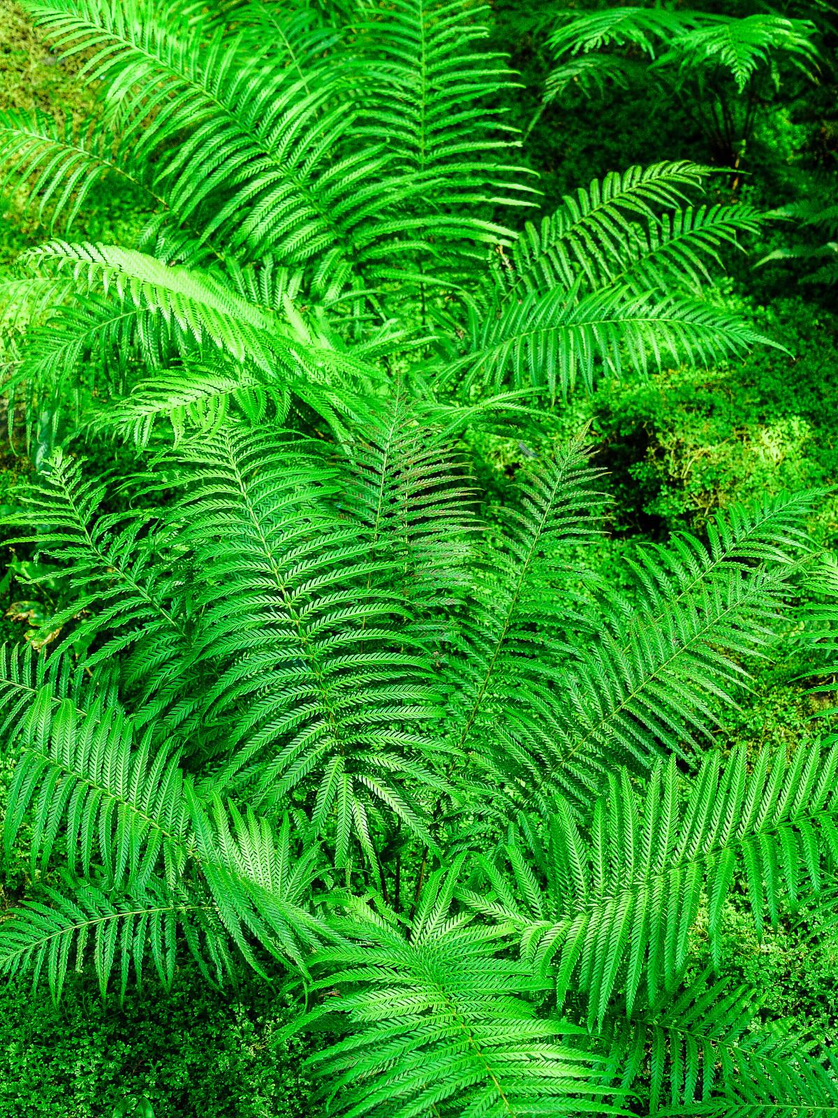 Green, Plant, Natural, Flora, Leaf, Nature