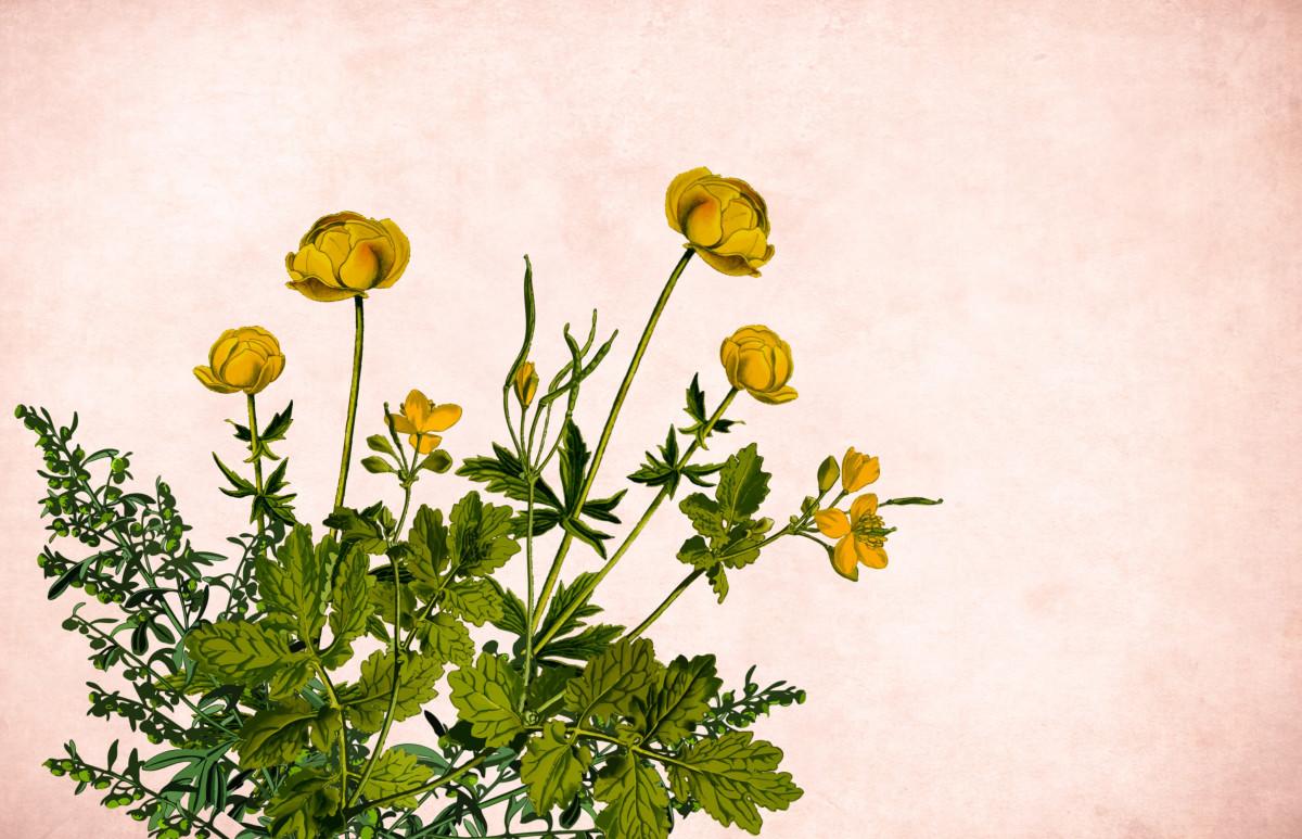 Цветы картинки на границе
