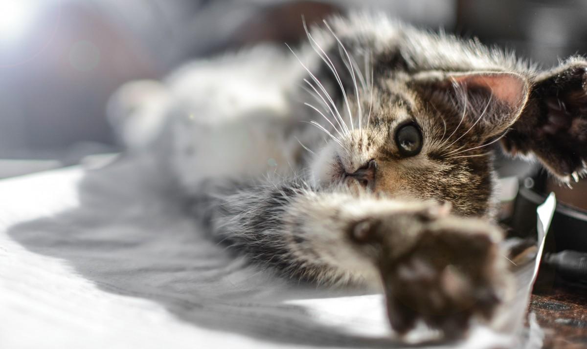 chaton chat mignonne