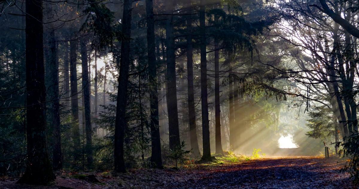 Banco de imagens : névoa, cedo, dom, natureza, árvore, atmosfera, luz  solar, manhã, Floresta de coníferas temperada, fenômeno, Floresta de  crescimento antigo, Abeto, abeto, floresta, Arvoredo, Bioma, céu, ramo,  tarde, Trevas, panorama,