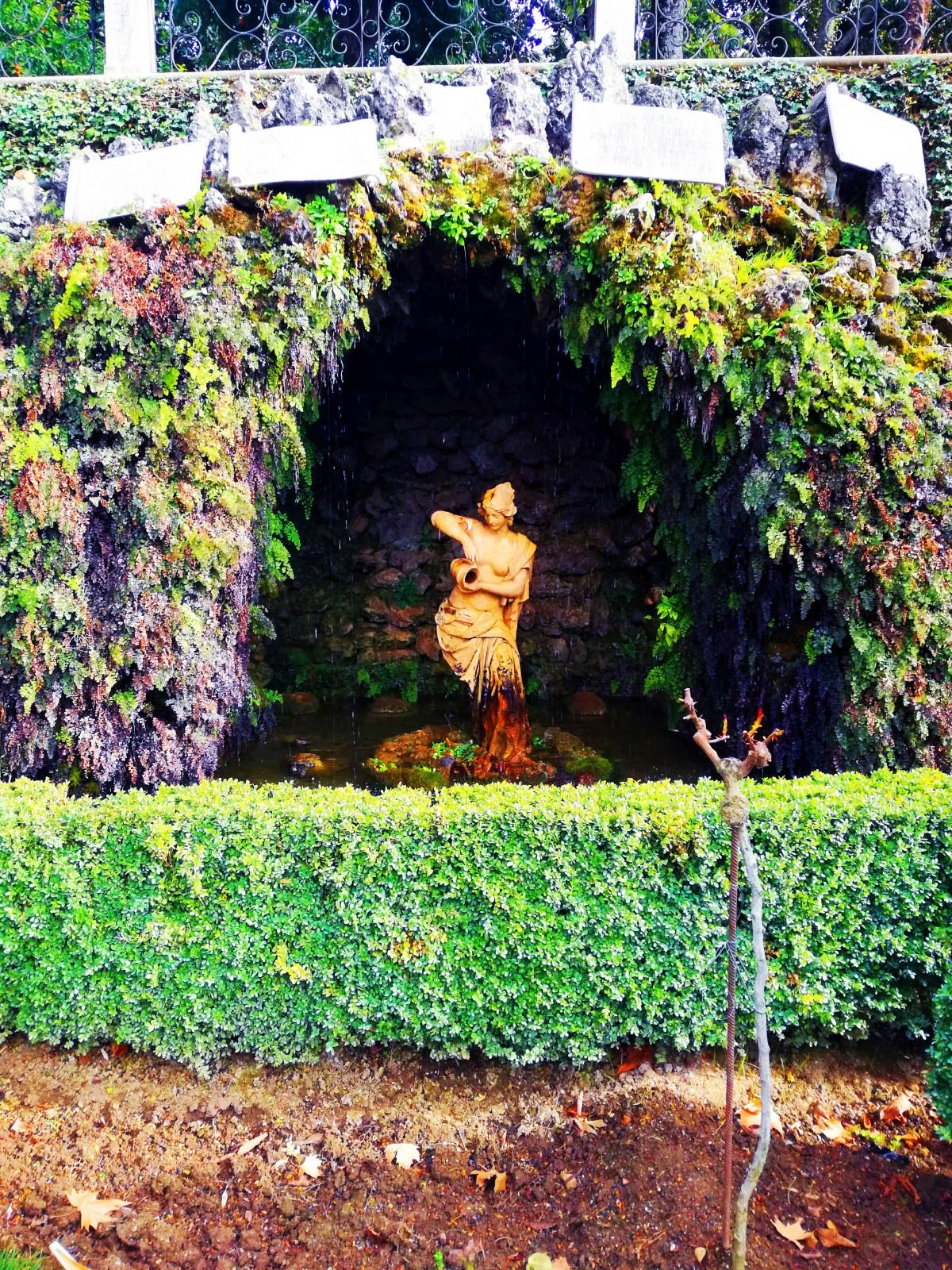 Plante Sur Les Murs images gratuites : la nature, vert, plante, feuille, jardin
