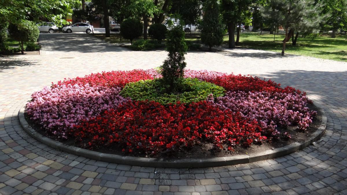 Aménagement D Un Parterre De Fleurs images gratuites : parterre de fleurs, fleurs rouges, beau