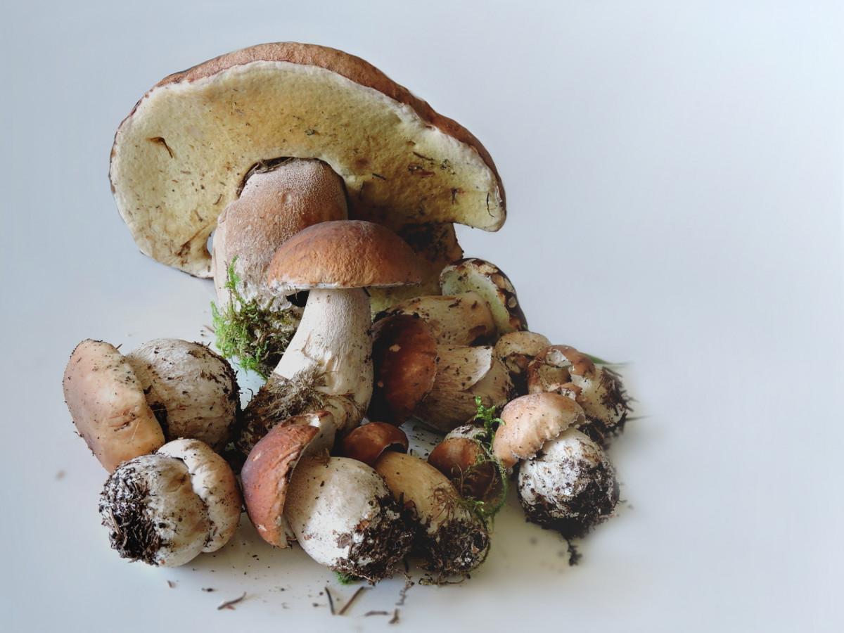 грядки картинки сырого грибами делаете
