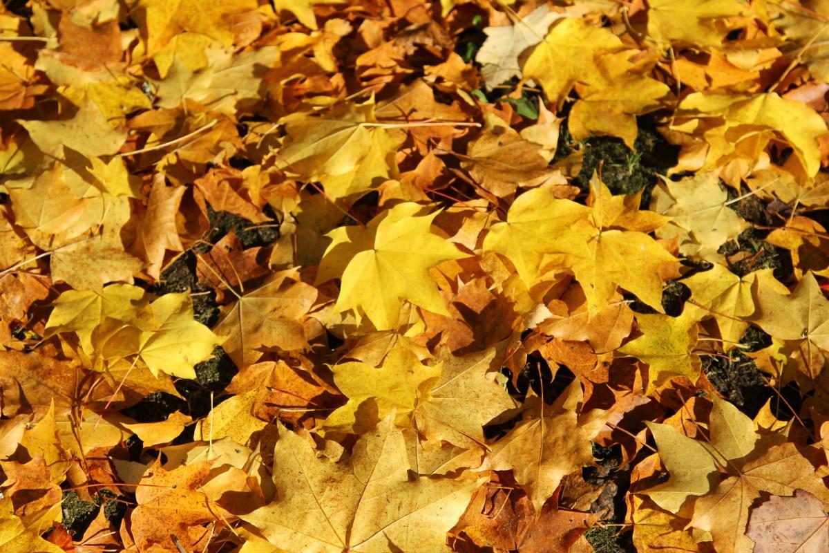 картинки осень листья падают красивые это богатая ленобласть