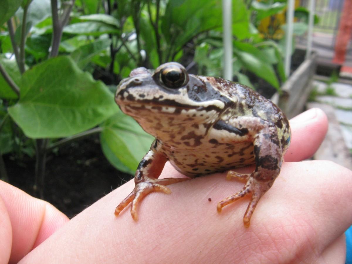 Фото и картинки лягушек, жаб и интересная информация