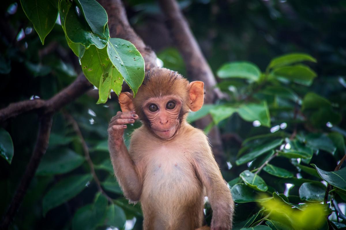 Картинка обезьянка с надписью