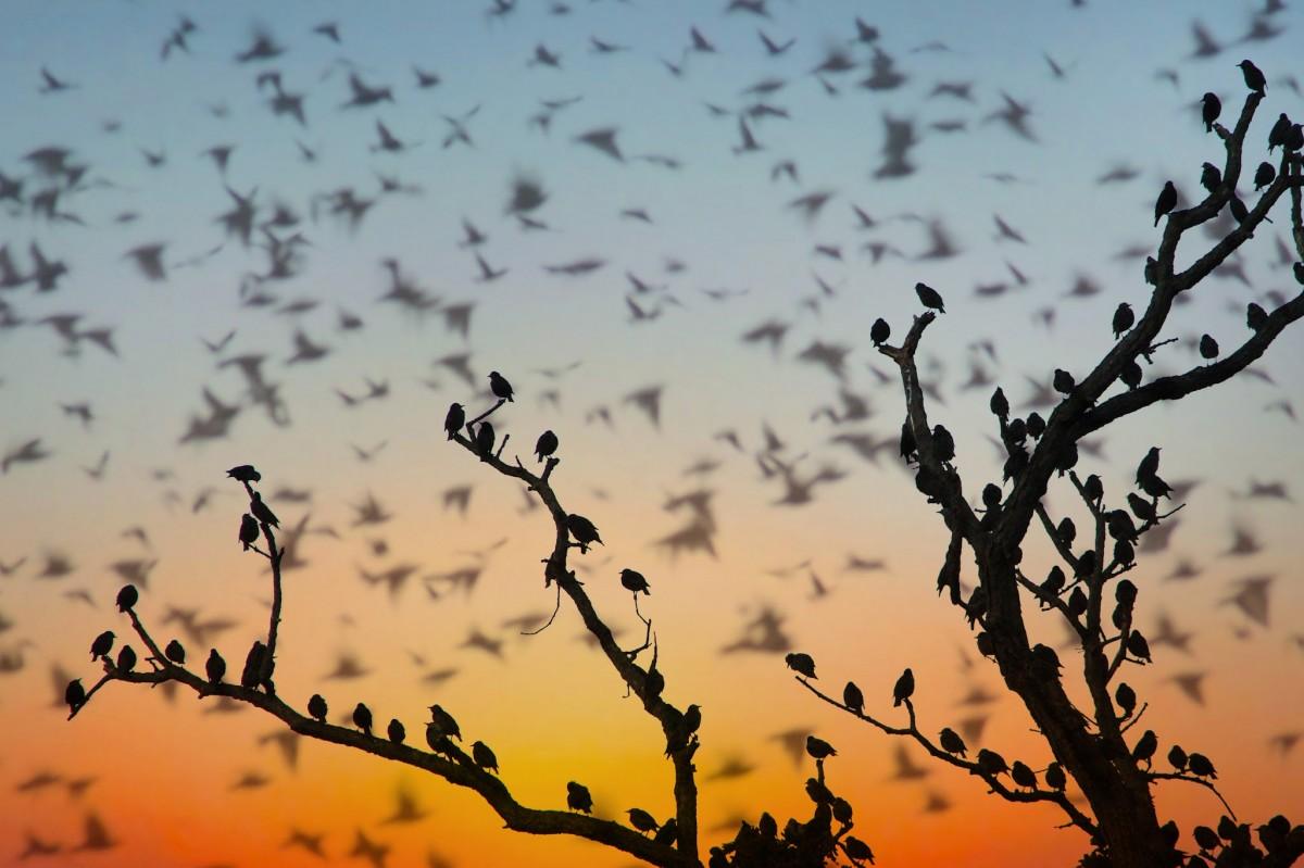 Картинки миграции птиц