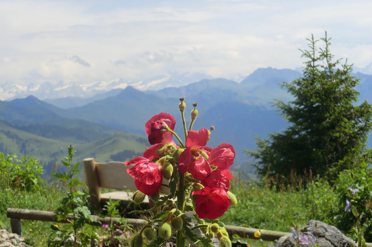 Free Images Flowers Mountains Flower Flora Mountainous
