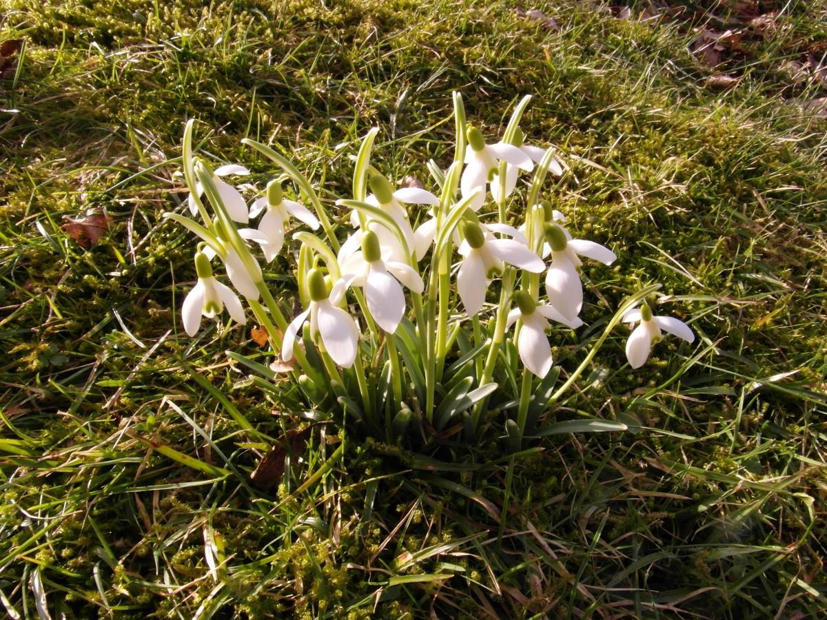 природа, трава, цвеÑти, раÑтение, белый, цветок
