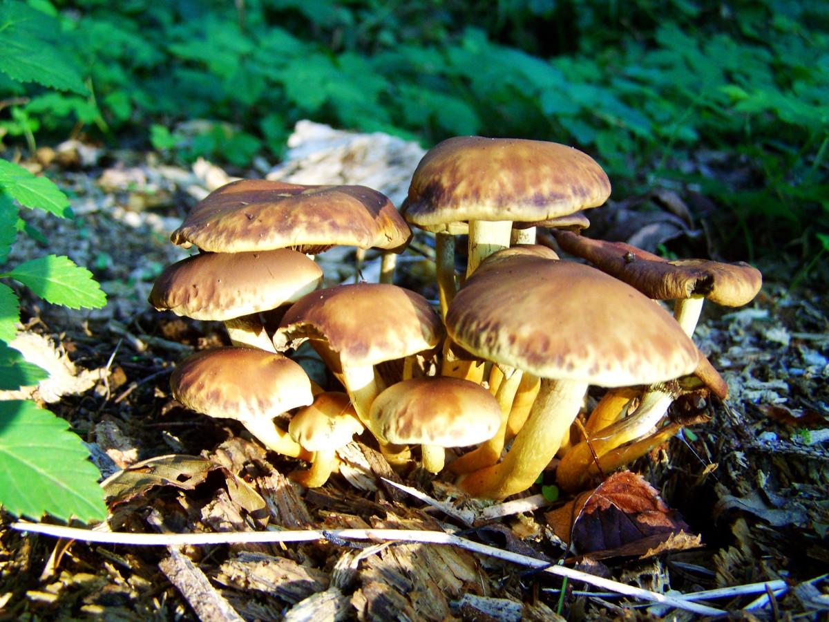 показать очень красивые картинки съедобных грибов мировой