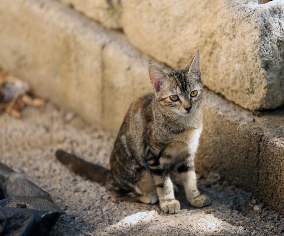 Images gratuites soleil france l 39 europe animal de for Exterieur kat