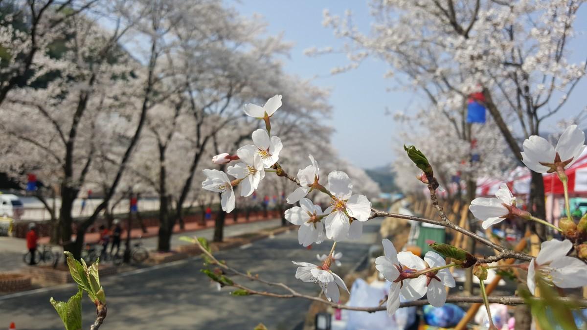Картинка пора года весна