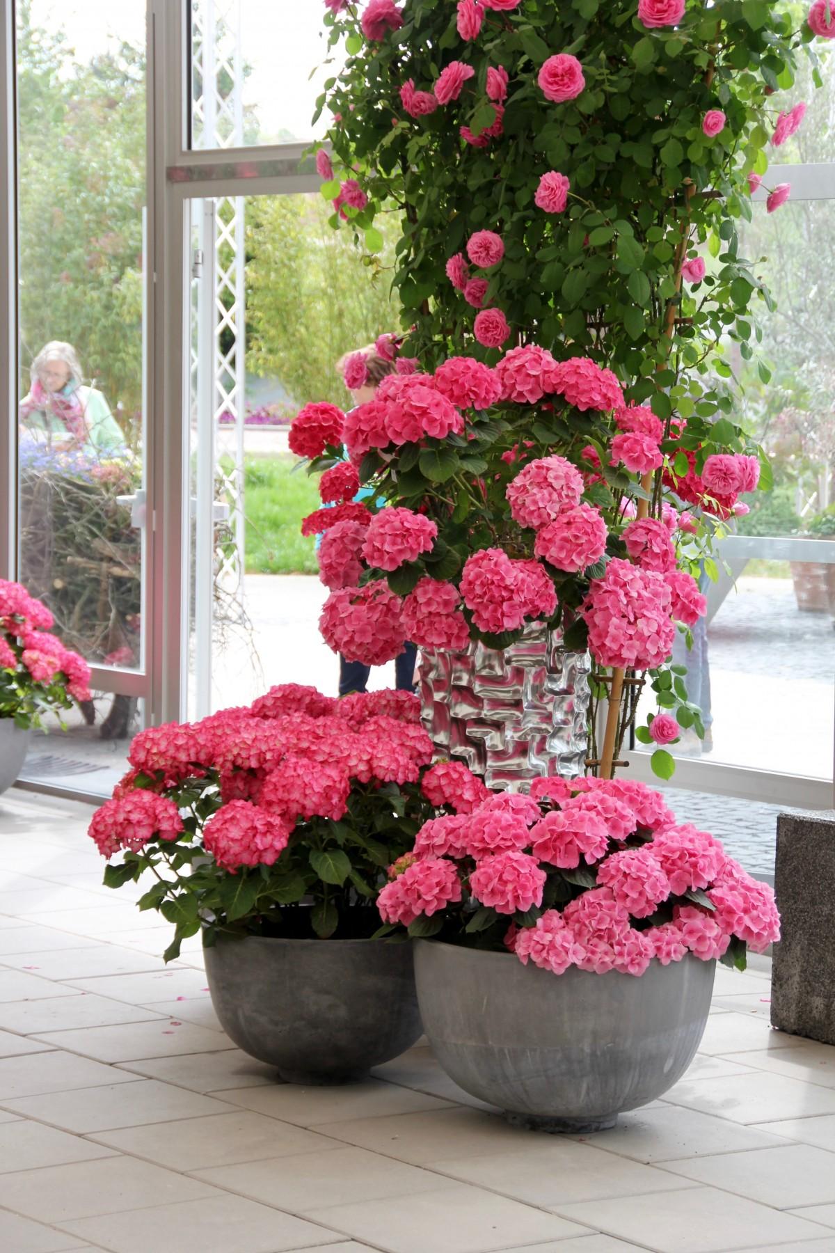 Banco de imagens plantar flor decora o rosa - Cortar hierba alta ...