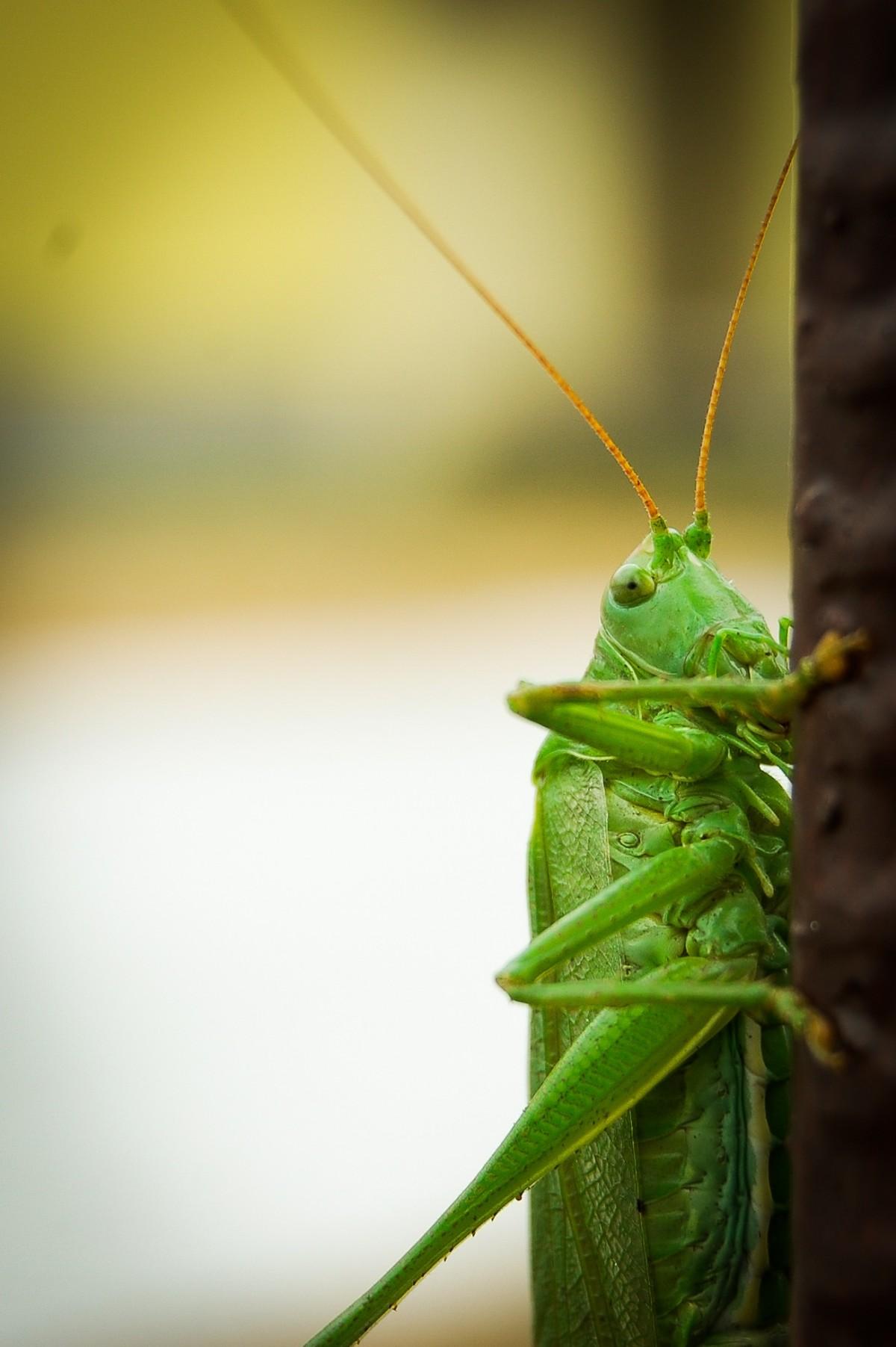 Vihreä Hyönteinen