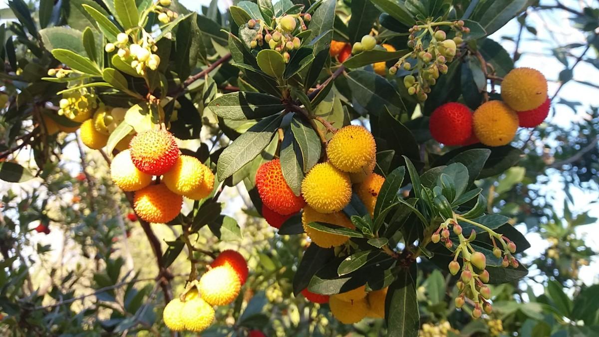 Free Images Landscape Nature Branch Fruit Flower