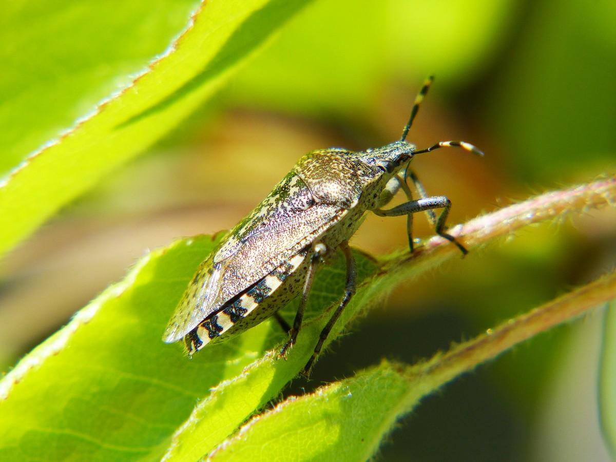 Images gratuites la nature la photographie vert - Insectes nuisibles du jardin ...