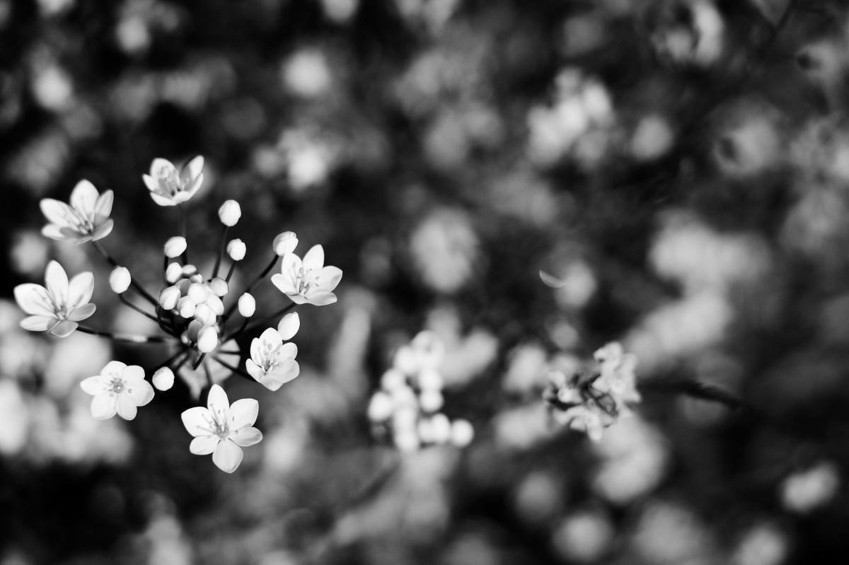 Надписью его, весна открытки черно белые