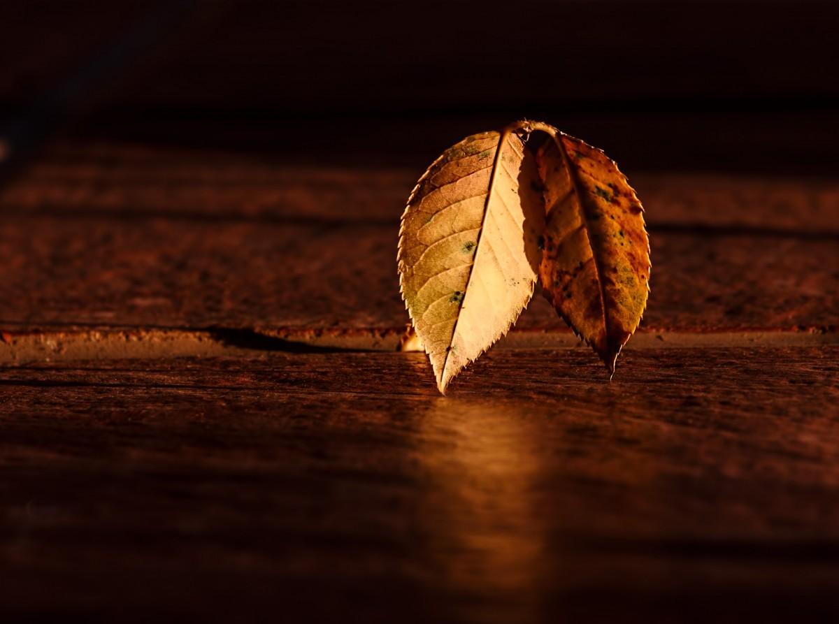 Kostenlose Foto : Natur, Licht, Pflanze, Holz