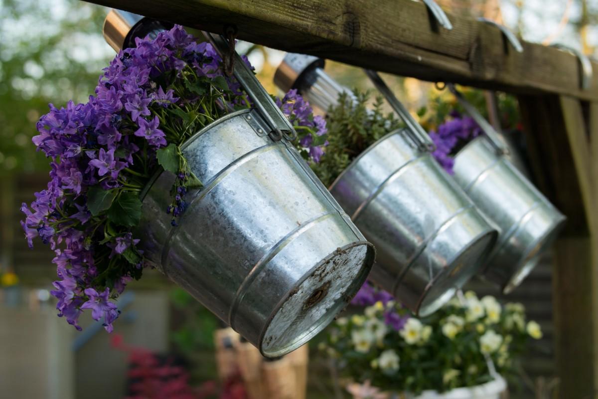 Images Gratuites : violet, Floraison, décoration, printemps ...