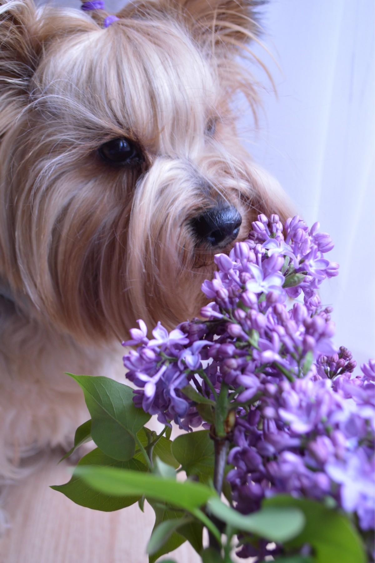 Тему, собаки и цветы картинки
