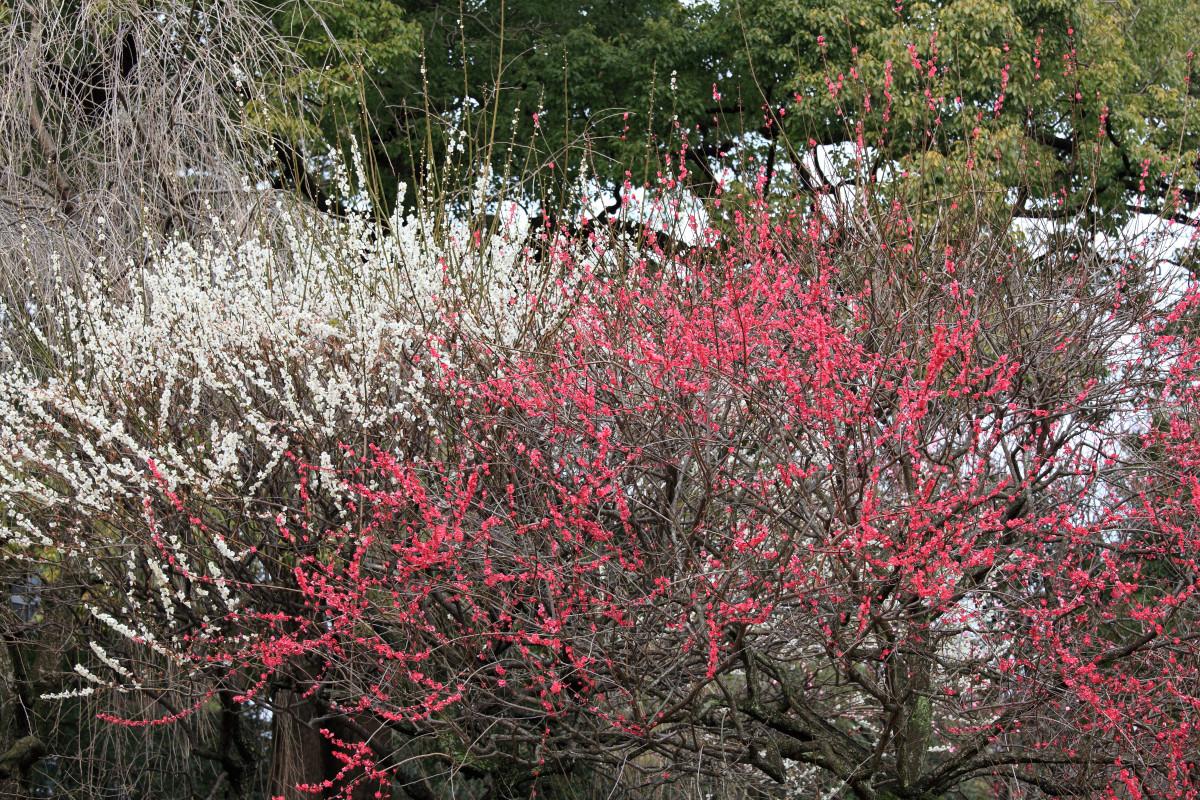 Images gratuites arbre herbe branche plante for Plante herbe haute