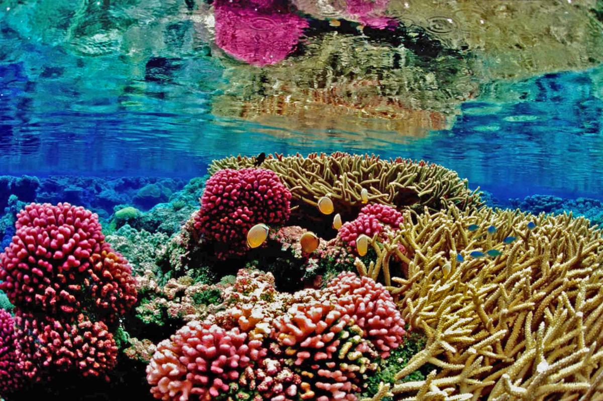 plage la nature océan fleur sous-marin la biologie corail récif de corail récif Marin mar habitat Recife Anémone biologie marine Poisson de récif corail