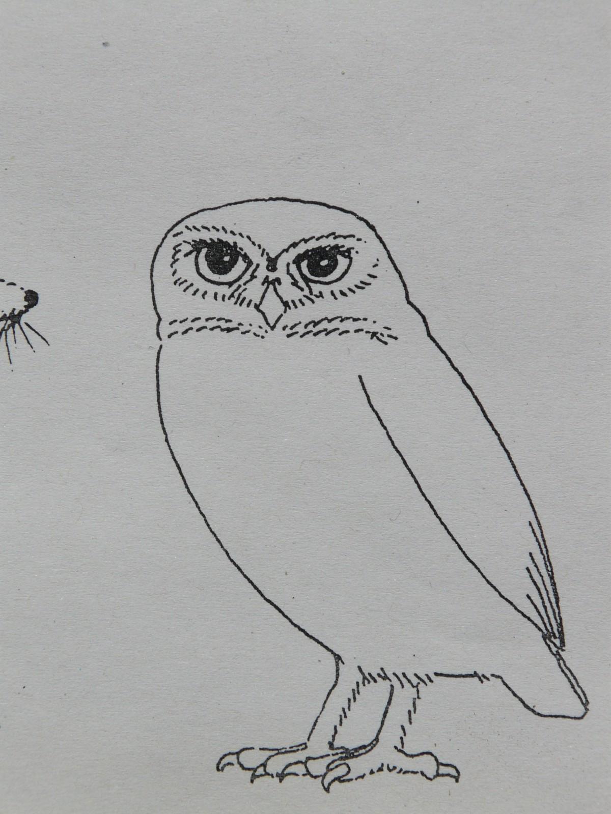 Bird wing animal paint owl bird of prey