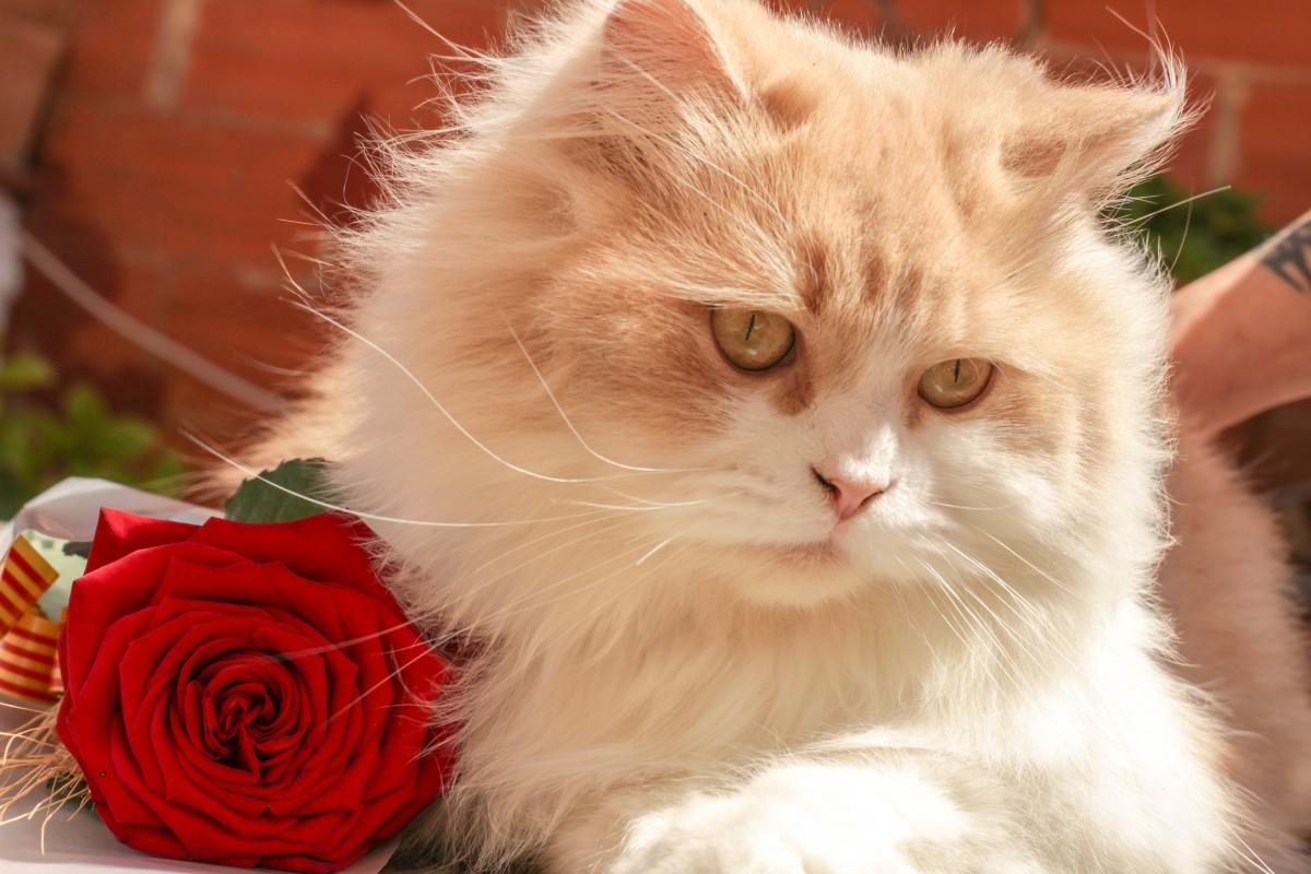 Фото котика с цветком