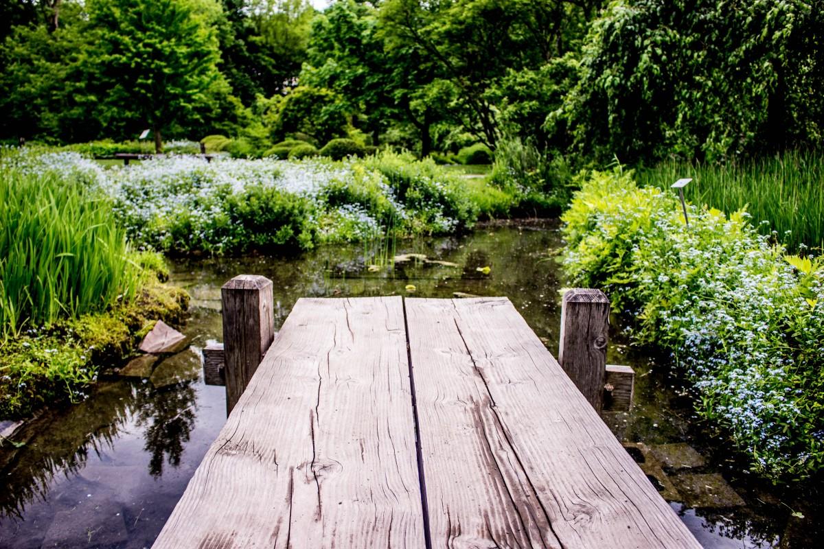 free images track lawn flower walkway pond backyard botany