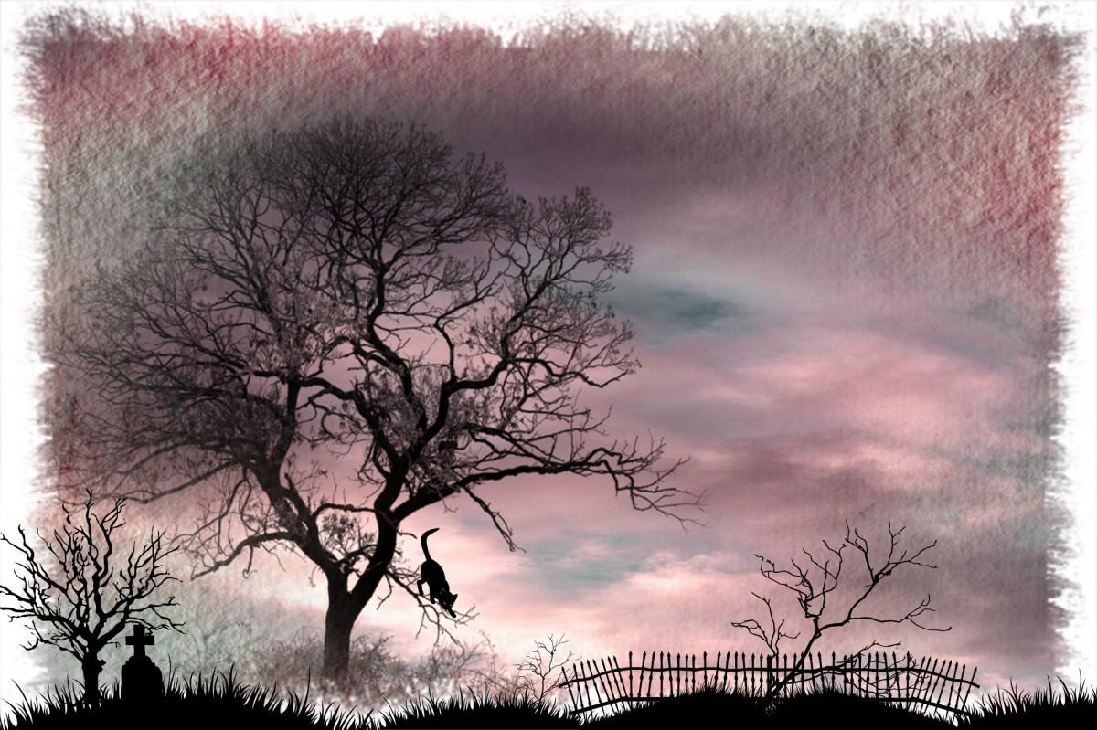 Morning Light >> Free Images : landscape, outline, light, star, atmosphere, animal, mystical, cat, weather ...