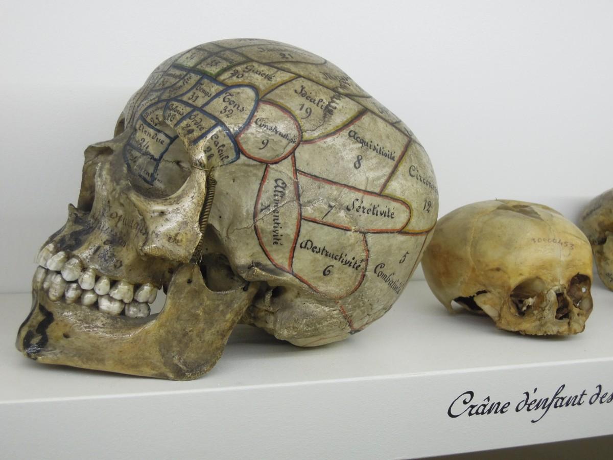 Fotos gratis : museo, Tortuga, cráneo, hueso, curiosidad, cabeza ...