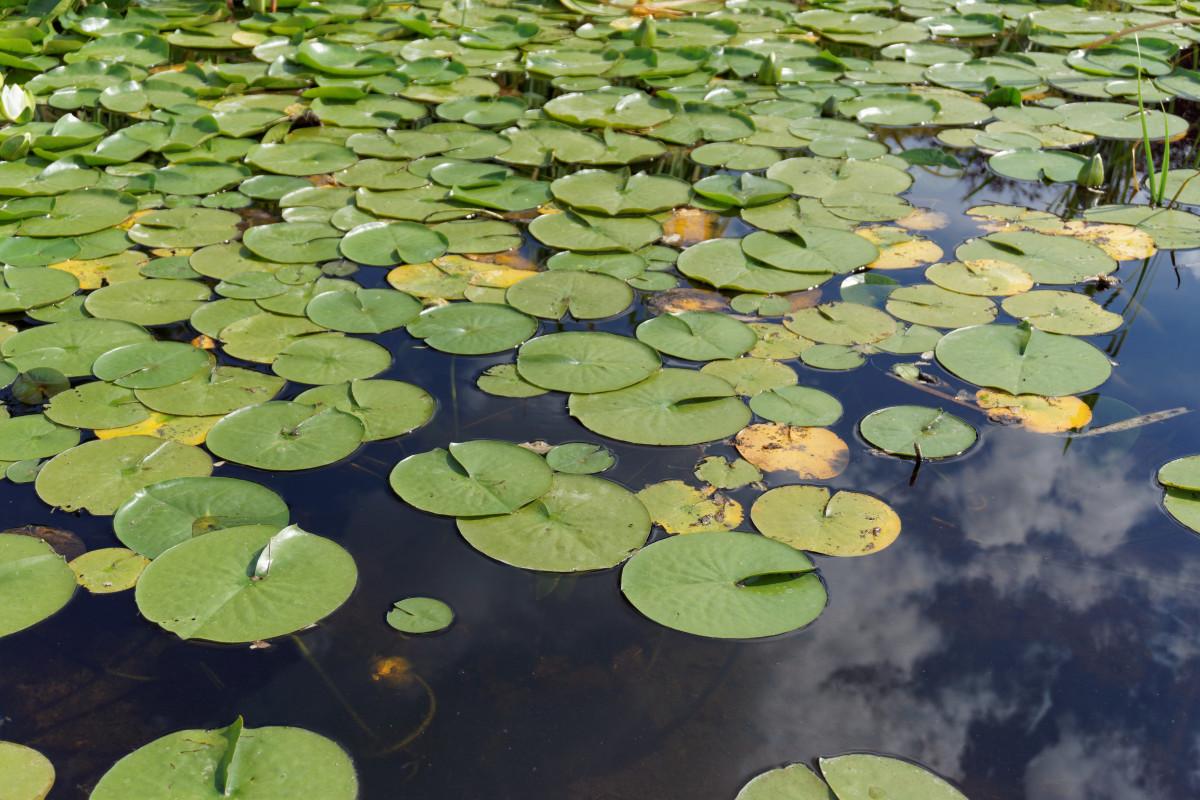 fotos gratis    u00e1rbol  naturaleza  c u00e9sped  pantano  hoja