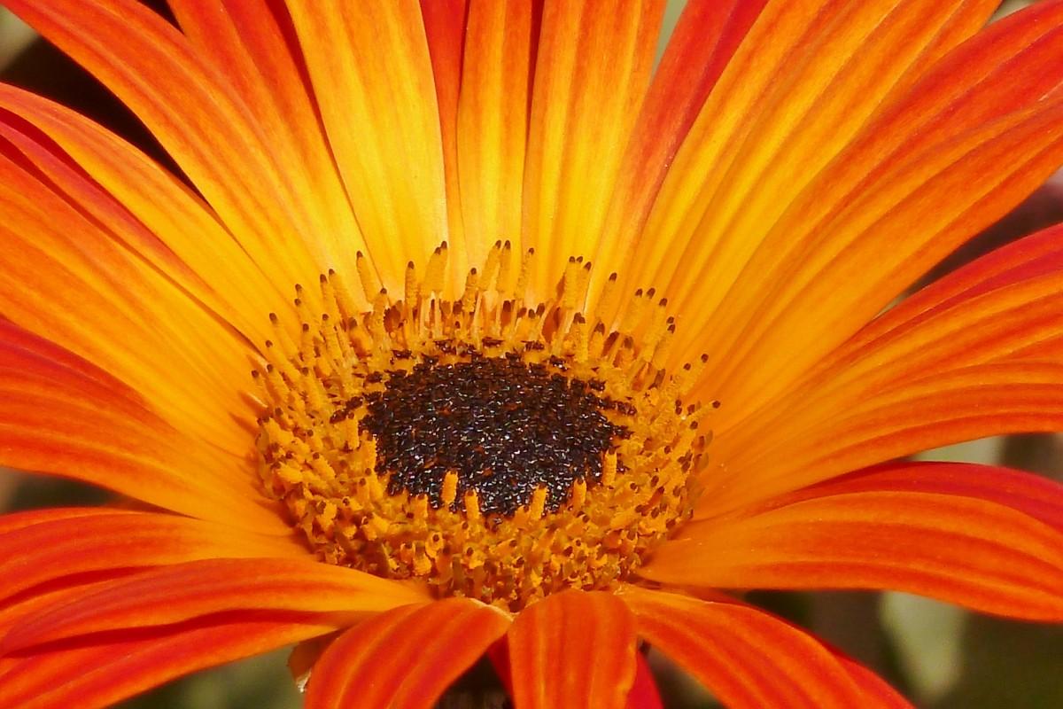 Красивые картинки оранжевые цветы